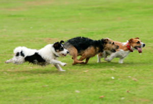 getty_rm_photo_of_dogs_running_in_park.jpg