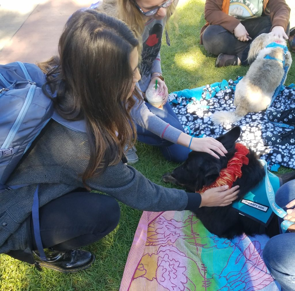 Therapy dog getting pet.