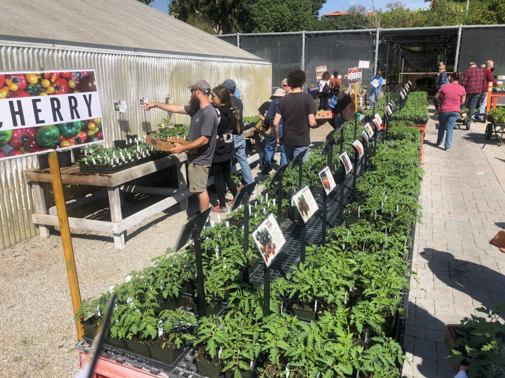 Local community members had over a hundred different rare tomato plants to choose from at the Horticulture Departments Tomato Sale.