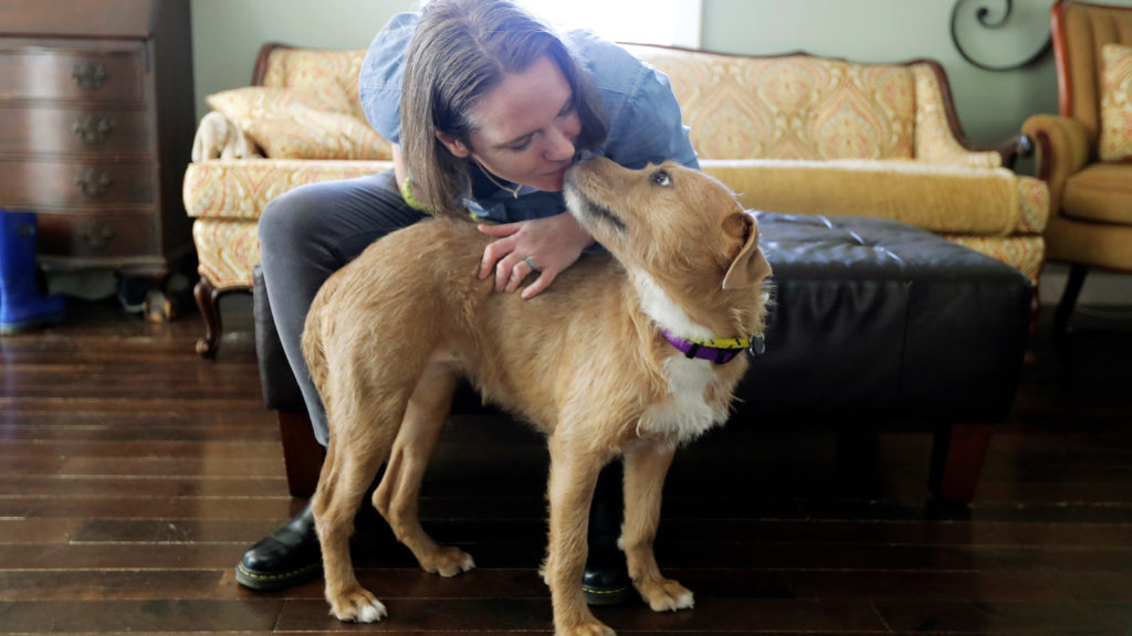Thousands of foster dogs and cats were adopted this year amid stay at home orders.