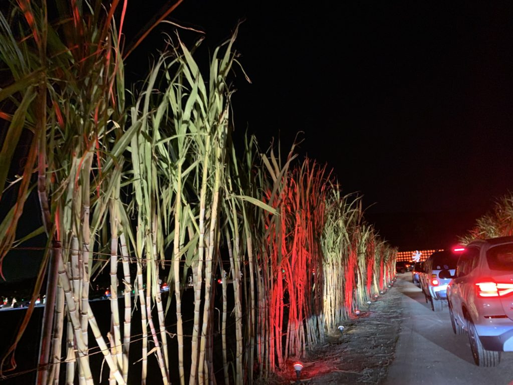 Tanaka Farms lit their tall sugarcane crops red and white to represent candy cane.