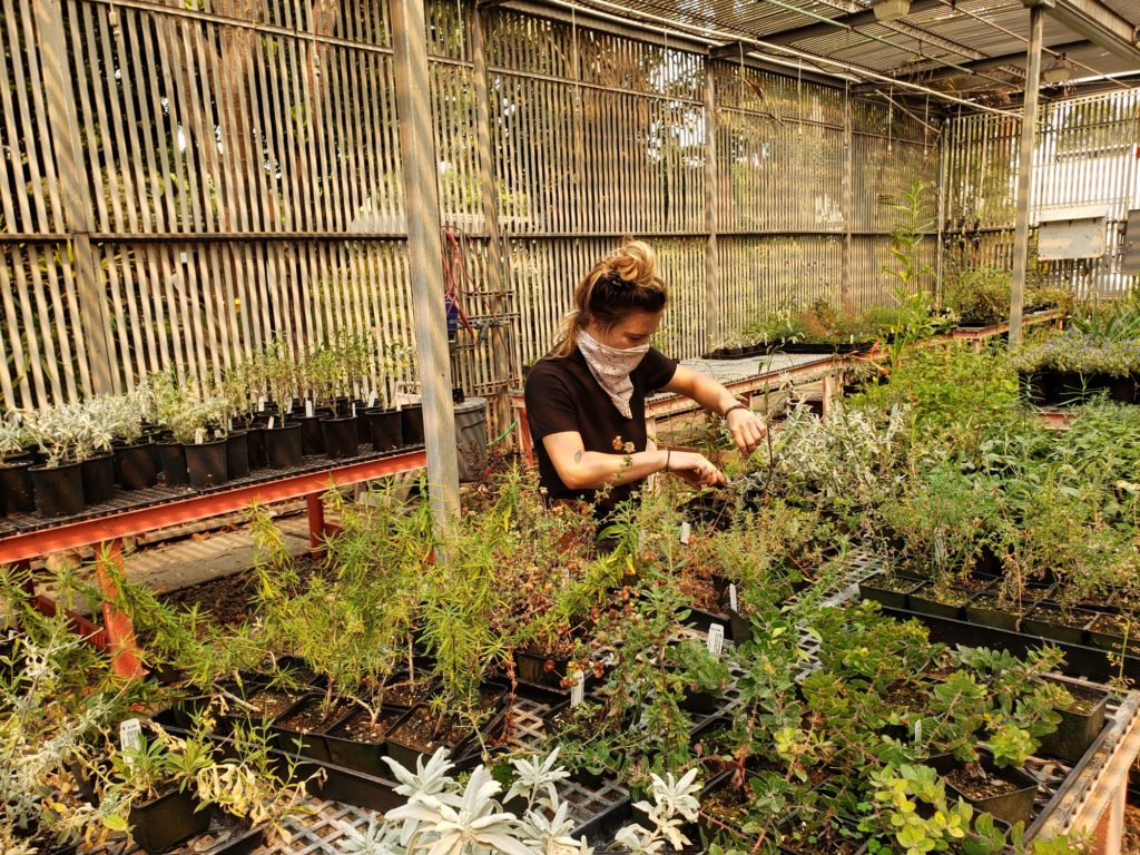 Fullerton College Horticulture Intern tending to plants