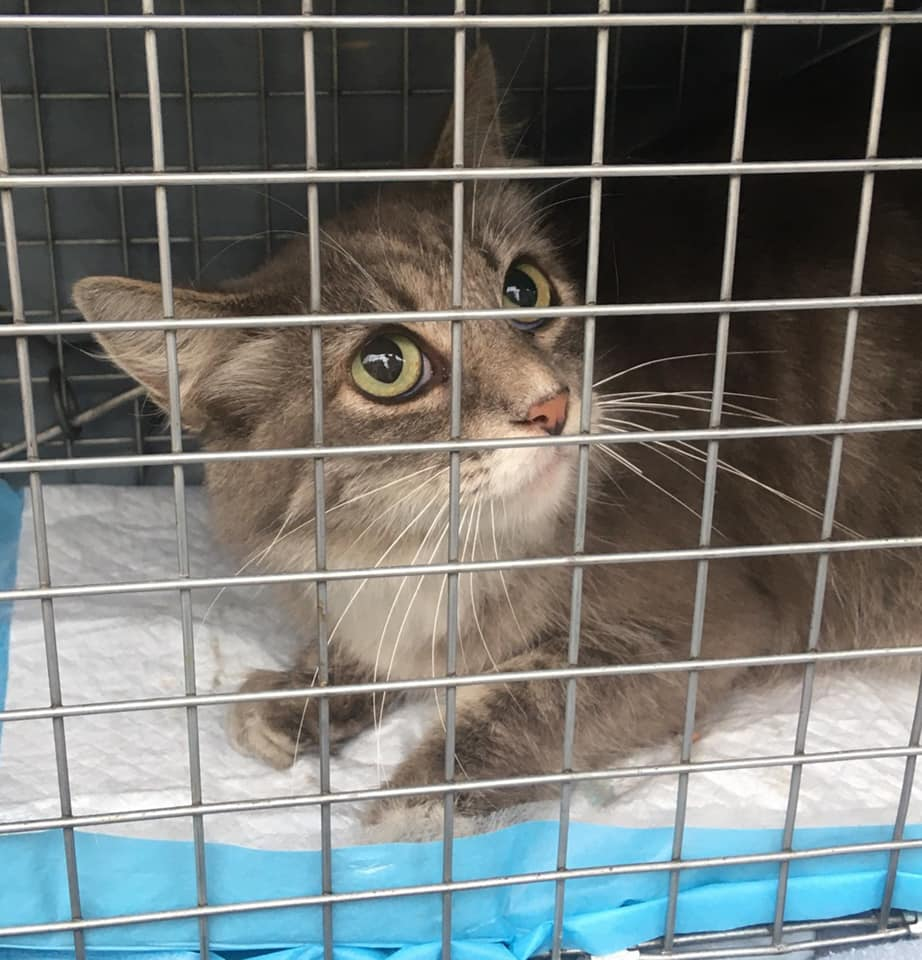 A cat named Penny being transported by a volunteer for veterinary care.